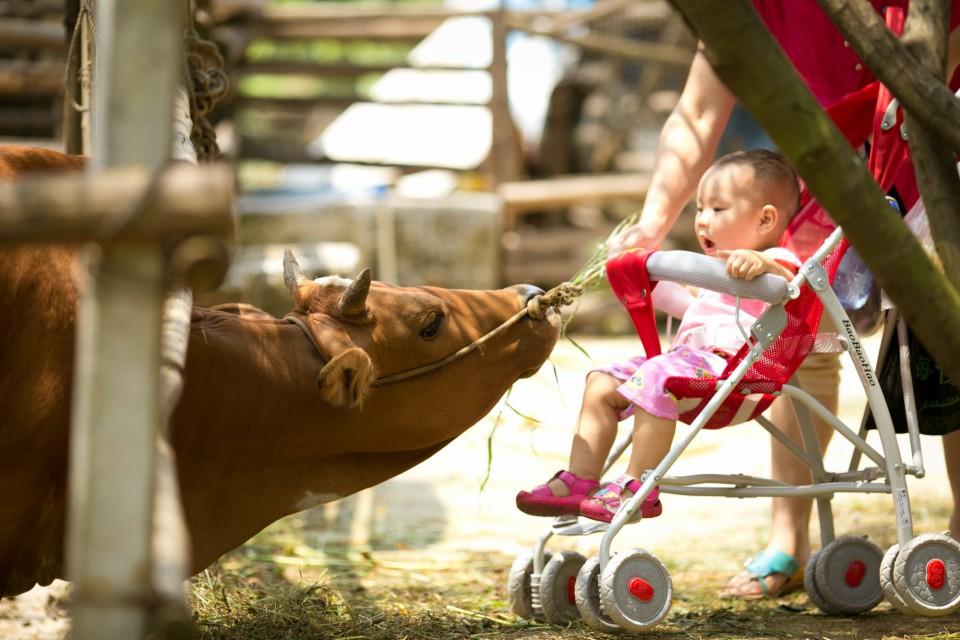 【喂养小动物】喂养小动物批发价格