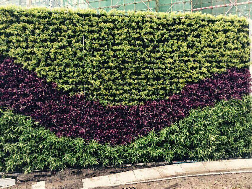 花墙 景观 墙 植物 852_640