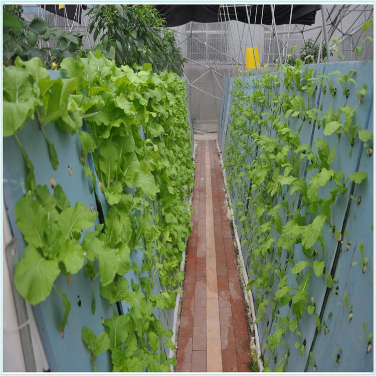 农业用具 其他农业用具  无土育苗种植绵 相关信息由 常州登月海绵