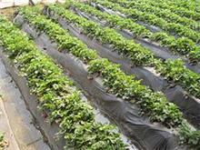 供应广西价格合理的蔬菜专用地膜:北海蔬菜专用膜
