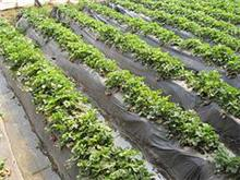 南宁市晟和兴塑胶专业供应蔬菜专用地膜|贵州蔬菜专用膜厂家