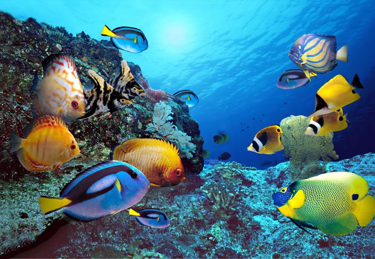 壁纸 海底 海底世界 海洋馆 水族馆 桌面 1280_885